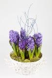 Pot met hyacinten Royalty-vrije Stock Fotografie