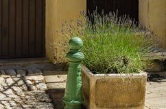 Pot met lavendel Stock Foto