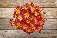 Pot of mums on rustic wood. Rustic barn wood background with a pot of fall mums stock photos
