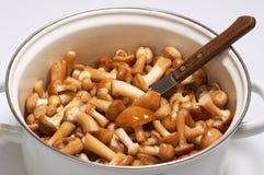 Pot of mushrooms. With knife. Honey mushroom (Armillariella mellea) - the most tasty agaric mushroom stock photo