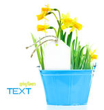 Pot of narcissus flower Royalty Free Stock Photography