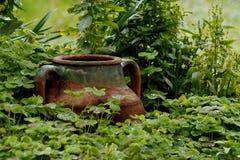 Pot onder natte klaver Royalty-vrije Stock Foto
