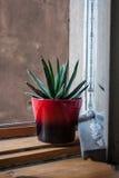 Pot op een vensterbank Royalty-vrije Stock Afbeelding