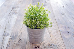 Pot of ornamental plants placed on wooden Stock Photography