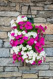 Pot of Petunia flowers  on a stone wall Royalty Free Stock Image