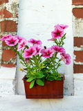 Pot with petunias on the brick wall background Stock Photo