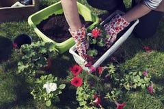 pot Piantatura dei fiori Giardinaggio della sorgente Immagine Stock