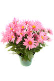 Pot of pink daisies Royalty Free Stock Photography
