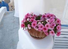 Pot with pink petunias Royalty Free Stock Photos