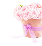 Pot of pink roses. Pot of pink fresh roses, beautiful flowers isolated on white background stock photos