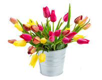 Pot with pink and yellow tulips flowers Royalty Free Stock Photos