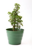 Pot plant Royalty Free Stock Photos