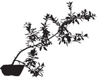 Pot plant Royalty Free Stock Photography