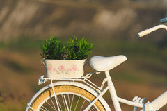 Pot with Plant on Bicycle Stock Image