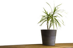 Pot plant on cupboard in front of white wall Royalty Free Stock Image
