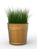 Pot plant. 3d rendering green grass in pot plant Royalty Free Stock Photography