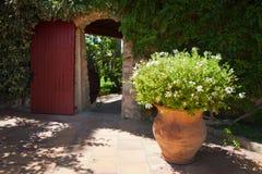 Pot Plant Beside Door Stock Image