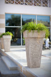 Pot with a plant at the entrance to a luxurious hotel Royalty Free Stock Image