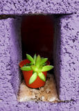 Pot plant in a hole Royalty Free Stock Photos
