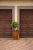 Pot plant inbetween two garage doors. A single pruned shrub in a square pot inbetween two wooden garage doors Royalty Free Stock Images