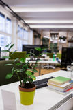 Pot plant, keyboard and book on office desk. In office Royalty Free Stock Image