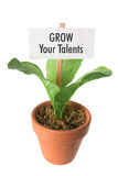 Pot Plant with Placard Royalty Free Stock Photography