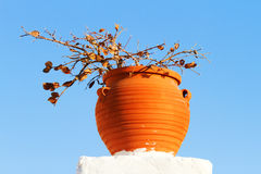 Pot with plant, Santorini Royalty Free Stock Photography