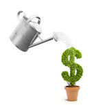 A pot plant shaped like a dollar sign. And a watering can Stock Images