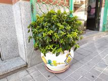 A pot with a plant on the street stock images