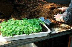Pot planting Stock Photos