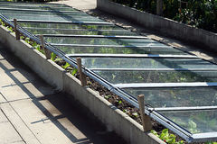 Pot planting in glass bed Stock Image