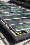 Pot Planting In Glass Bed Stock Photo