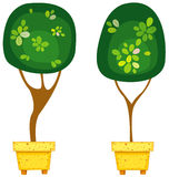 Pot plants Royalty Free Stock Image