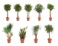 Pot plants Stock Photo