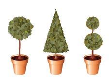 Pot plants Stock Photos