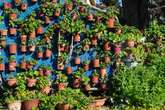 Pot plants Stock Photo