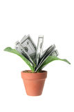 Pot Plants with Dollar Notes Stock Photography