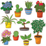 Pot plants and flowers Royalty Free Stock Photo