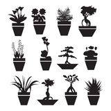 Pot plants  garden flowers  and  herbs - Illustration Royalty Free Stock Image