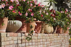 Pot Plants Royalty Free Stock Images