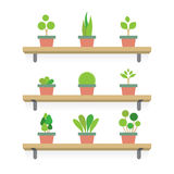 Pot Plants Gardening Concept Royalty Free Stock Photos