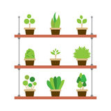 Pot Plants Gardening Concept Stock Photography