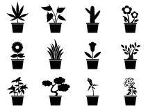 Pot plants icons set. Isolated black pot plants icons set from white background Stock Photo
