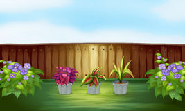 Pot of plants inside the high fence Royalty Free Stock Photo