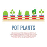Pot Plants In Long Wooden Pot Royalty Free Stock Photos