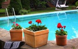 Free Pot Plants On Swimming Pool Border Design Stock Images - 95044494