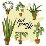 Pot plants set. Hand-drawn design elements Stock Image