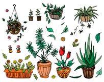Pot plants set, hand-drawn design elements. Royalty Free Stock Images