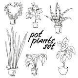 Pot plants set. Hand-drawn design elements Stock Photos