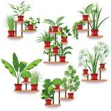 Pot Plants Set Royalty Free Stock Photo